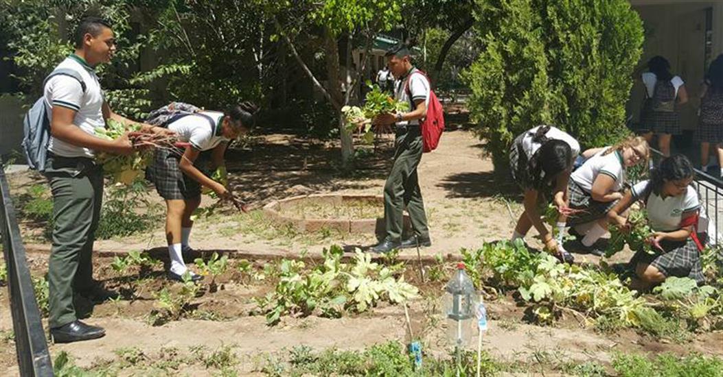 Tiene comedor estudiantil comunitario de conalepguaymas for Comedor estudiantil